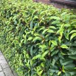 Tuinieren is de nieuwe trend